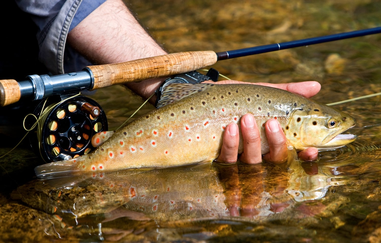 fisher holding brown trout